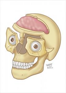 img-craniofacial_infraorbital-1-88755